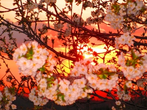 Photo by me! Spring in Bloom, yesterday, Italy, 2013